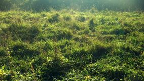 Las telarañas en la hierba se sacuden y rielan en sol almacen de video