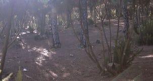 Las Tenerife wyspa, Hiszpania zbiory wideo