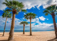 Las Teresitas, Tenerife,Spain: Las Teresitas beach and San Andres village,Canary royalty free stock photo