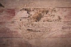 Las termitas comen el piso de madera Foto de archivo libre de regalías