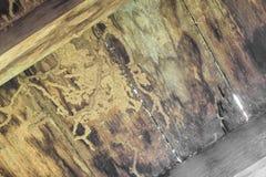 Las termitas comen el piso de madera Imágenes de archivo libres de regalías