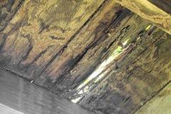 Las termitas comen el piso de madera Fotografía de archivo libre de regalías