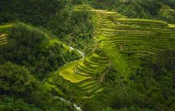 Las terrazas de la naturaleza Imagen de archivo libre de regalías