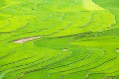 Las terrazas del arroz colocan en la estación de Rainning en Tule Fotos de archivo