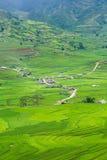 Las terrazas del arroz colocan en la estación de Rainning en Tule Foto de archivo