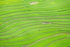 Las terrazas del arroz colocan en la estación de Rainning en Tule Foto de archivo libre de regalías