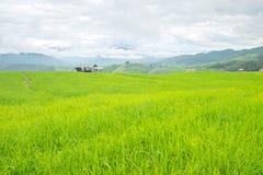 Las terrazas del arroz en una montaña, y allí son una choza en el medio del campo del arroz Imagen de archivo