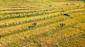 Las terrazas más hermosas del arroz en poca aldea de las terrazas rodantes del arroz fotos de archivo libres de regalías