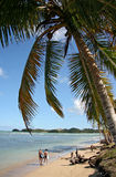 Las Terrenas beach scenic. Scenic view of tourists on Las Terrenas beach with palm tree in foreground, Dominican Republic stock photos