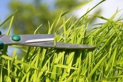 Las tijeras agudas de la peluquería cortaron la hierba verde enorme en el ` del vesen fotografía de archivo libre de regalías