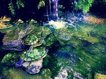 Las tortugas Fotografía de archivo