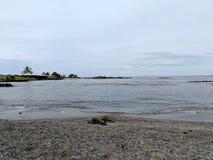Las tortugas descansan sobre la playa en la trampa de los pescados de Aiopio imagen de archivo libre de regalías