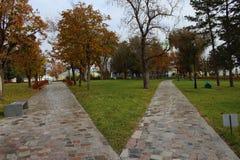 Las trayectorias de los árboles de la naturaleza del bosque para dos opciones de la manera bench el otoño noviembre frío cubierto Fotografía de archivo libre de regalías