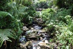 Las Tropikalny Zdjęcie Stock