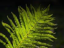 Las tropikalny paprocie zdjęcia royalty free