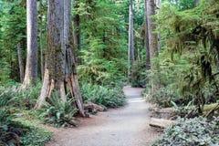 Las tropikalny w olimpijskim parku narodowym, Waszyngton, usa zdjęcie royalty free
