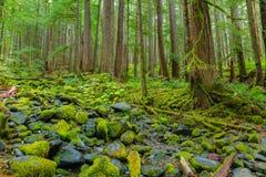 Las Tropikalny w Oregon Zdjęcie Stock