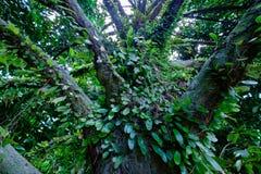 Las tropikalny w rayong Zdjęcia Royalty Free