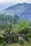 Las tropikalny w Sinharaja lasu rezerwie, Sri Lanka Zdjęcie Stock