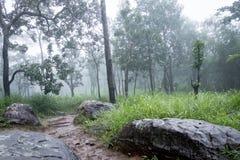 Las tropikalny z mgłą, mgła Fotografia Stock