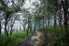 Las tropikalny z mgłą, mgła Obraz Royalty Free