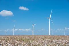 Las turbinas de viento cultivan en el campo en el Corpus Christi, Tejas, los E.E.U.U. del algodón Imagen de archivo libre de regalías