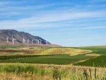 Las turbinas de viento en la colina rematan con los campos de trigo Fotografía de archivo