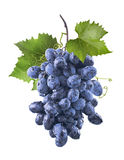 Las uvas azules mojadas grandes agrupan y las hojas aisladas en blanco Imagenes de archivo