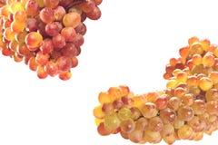 Las uvas maduras aislaron Foto de archivo libre de regalías