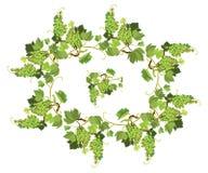 Las uvas ovales enmarcan y repitieron el elemento para las etiquetas o el menú d del vino Imagenes de archivo