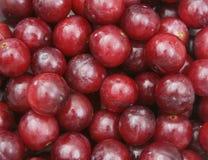 Las uvas se cierran para arriba Fotos de archivo