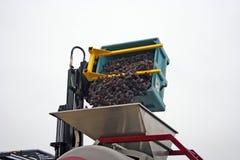 Las uvas vaciaron en tolva Foto de archivo