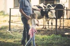 Las vacas dan la leche para hacerle sano imagen de archivo libre de regalías