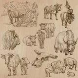 Las vacas y ganado - dé el paquete exhausto del vector Fotografía de archivo