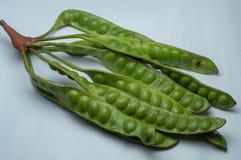 Las vainas de la semilla de Petai o del Parkia Speciosa de Indonesia aislaron en el fondo blanco foto de archivo