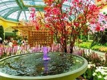 Las Vegas Amerikas förenta stater - Maj 05, 2016: Den japanska blomningträdgården på det lyxiga hotellet Bellagio Royaltyfria Bilder
