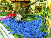 Las Vegas Amerikas förenta stater - Maj 05, 2016: Den japanska blomningträdgården på det lyxiga hotellet Bellagio Royaltyfri Bild