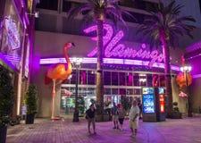 Las Vegas, fenicottero Immagini Stock Libere da Diritti