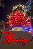 Las Vegas flamingo Royaltyfri Fotografi
