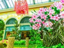 Las Vegas, los Estados Unidos de América - 5 de mayo de 2016: El jardín floreciente japonés en el hotel de lujo Bellagio Foto de archivo libre de regalías