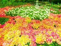Las Vegas, los Estados Unidos de América - 5 de mayo de 2016: El jardín floreciente japonés en el hotel de lujo Bellagio Fotografía de archivo