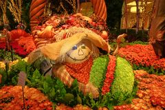 Fall season in Bellagio Hotel Conservatory & Botanical Gardens Stock Photography
