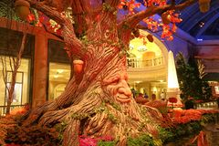 Fall season in Bellagio Hotel Conservatory & Botanical Gardens Royalty Free Stock Photography