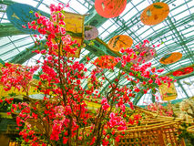Las Vegas, Stany Zjednoczone Ameryka, Maj - 05, 2016: Japoński kwiecenie ogród przy luksusowym hotelem Bellagio Zdjęcia Stock