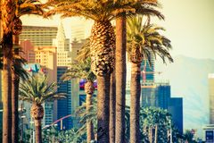 Las Vegas Strip Palms. In Colorful Color Grading. Las Vegas, Nevada, United States Royalty Free Stock Photography