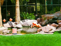 Las Vegas, United States of America - May 05, 2016: Flamingo Hotel and Casino. Las Vegas, United States of America - May 05, 2016: Flamingos at Flamingo Hotel stock photos