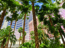 Las Vegas, United States of America - May 05, 2016: Flamingo Hotel and Casino. Las Vegas, United States of America - May 05, 2016: The palms at Flamingo Hotel royalty free stock image