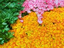 Las Vegas, United States of America - May 05, 2016: The Japanese flowering garden at luxury hotel Bellagio. At Las Vegas, United States of America stock image