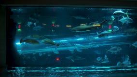 Las Vegas, USA-November 07,2017: Aquarium With Exotic Fish And Sharks stock video
