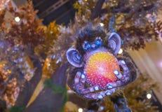 Las Vegas, Venetiaans Chinees Nieuwjaar Royalty-vrije Stock Foto